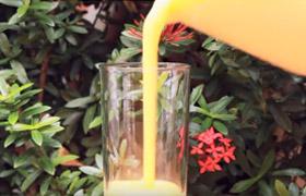 Mango Joghurt